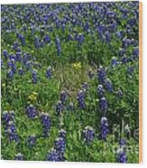 Field Of Bluebonnets Wood Print