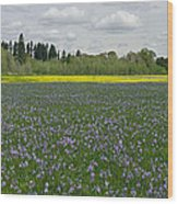 Field Of Camas And Western Buttercup Wood Print