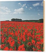 Field Of Common Poppies Wood Print