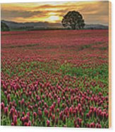 Field Of Crimson Clover With Lone Oak Wood Print