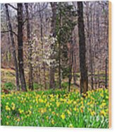 Field Of Daffodils Wood Print