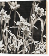 Field Of Daisies Wood Print