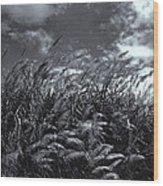 Field Of Dreams Wood Print