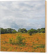 Field Ablaze Wood Print