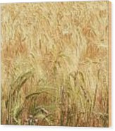 Field Of Gold - 3 Wood Print