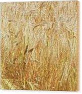Field Of Gold 1 Wood Print