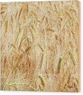 Field Of Gold - 4 Wood Print