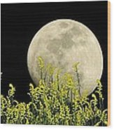 Field Of Gold By Moonlight Wood Print