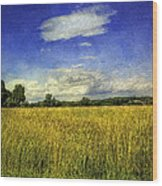 Field Of Gold Wood Print