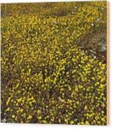 Field Of Goldfields In Park Sierra-ca Wood Print