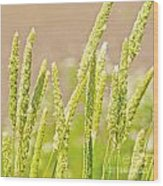 Field Of Grass And Wildflowers II Wood Print by Artist and Photographer Laura Wrede