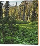 Field Of Green And Gold Wood Print
