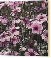 Field Of Lavender Wood Print