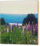 Field Of Lupines Wood Print