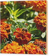 Field Of Marigolds Wood Print
