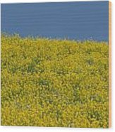Field Of Mustard Wood Print