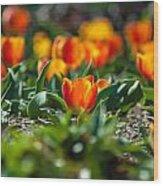Field Of Orange Tulips Wood Print