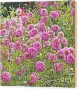 Field Of Pink Dahlias Wood Print