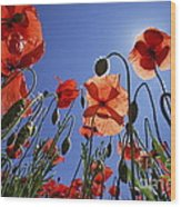 Field Of Poppies At Spring Wood Print