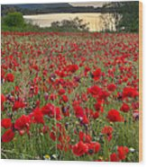 Field Of Poppies At The Lake Wood Print