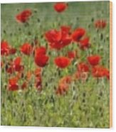 Field Of Poppies Wood Print