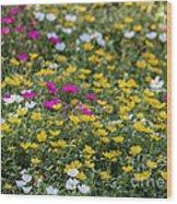 Field Of Pretty Flowers Wood Print