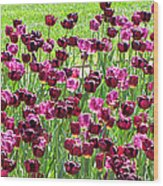 Field Of Purple Tulips 1 Wood Print