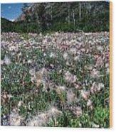 Field Of Seeding Flowers Wood Print