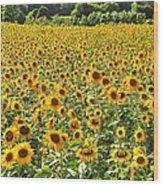 Field Of Smiles Wood Print