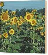 Field Of Smiley Faces Wood Print