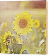 Field Of Sunshine Wood Print