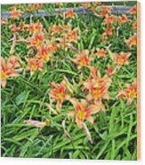 Field Of Tiger Lilies Wood Print