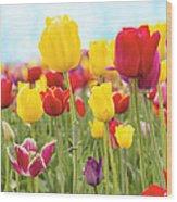 Field Of Tulip Flowers Against Blue Sky Wood Print