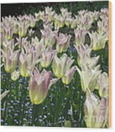 Field Of Tulips Wood Print