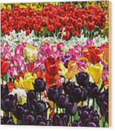 Field Of Tulips Ll Wood Print