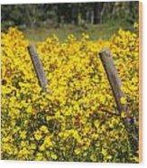 Field Of Yellow Wood Print