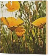 Field Of Yellow Poppies Wood Print