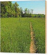Field Path Wood Print