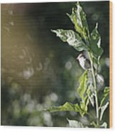 Field Sparrow Wood Print