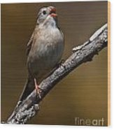 Field Sparrow Pictures 23 Wood Print