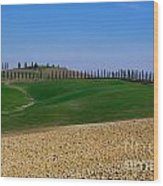 Field With Cypress Trees Wood Print