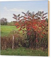 Field With Sumac In Autumn Wood Print