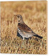 Fieldfare Wood Print