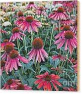 Fields Of Coneflower Wood Print