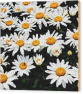 Fields Of Daisies Wood Print