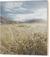 Fields Of Grass In Nevada Desert Wood Print