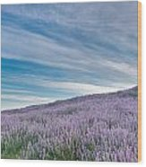 Fields Of Lupine 1 Wood Print