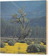 Fields Of Yellow Foxglove Wood Print