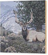 Fields Peak Elk Wood Print