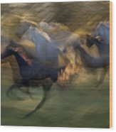 Fiery Gallop Wood Print